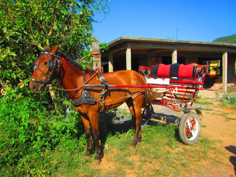 кудели лошади старые стоковое фото rf
