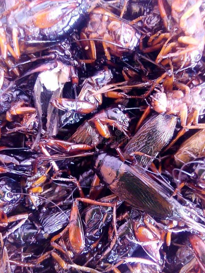 Кудрявые насекомые Critters стоковые фотографии rf