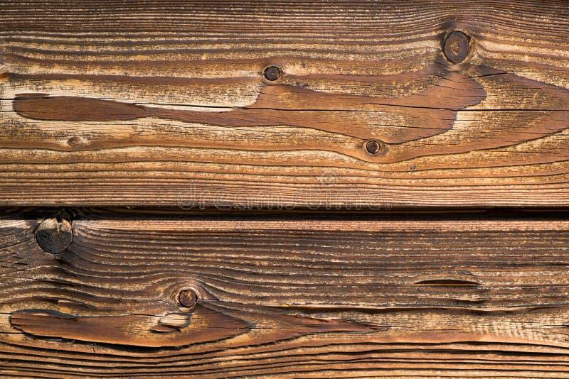 Классицистическая древесина стоковые изображения rf