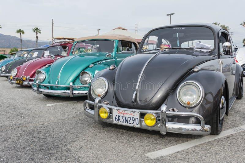 Классические автомобили Volkswagen Beetle на дисплее стоковое изображение