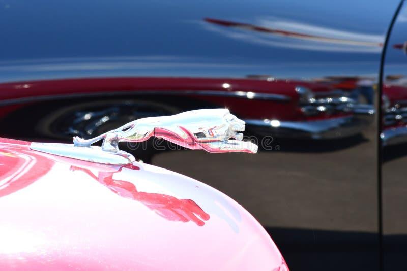 Классический клобук красного цвета орнамента клобука льва автомобиля стоковые изображения