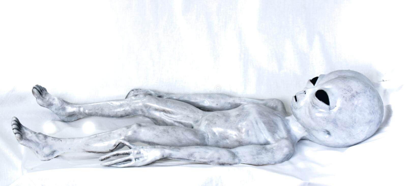 Класть чужеземца серый на кровать стоковое изображение rf