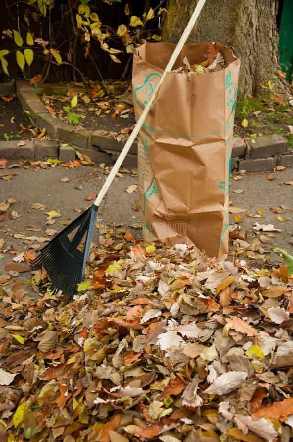 Кладя в мешки листья падения стоковое изображение rf