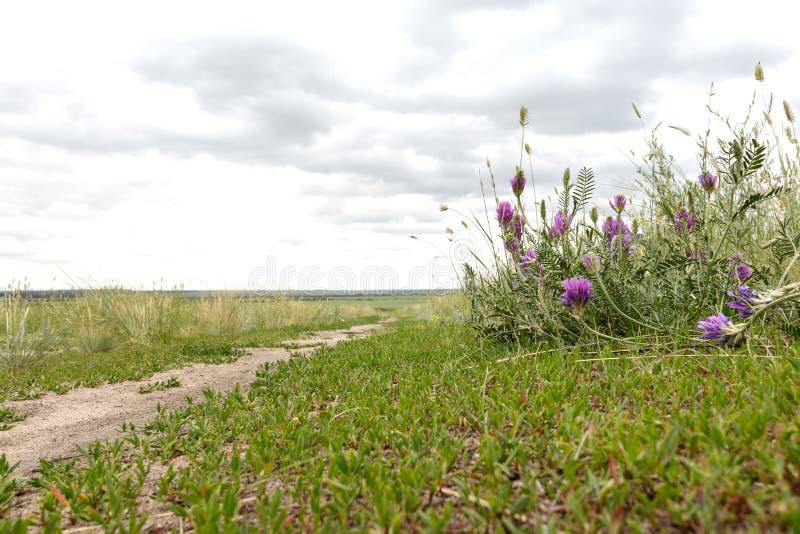 Клевер растет на крае дороги поля стоковое изображение rf