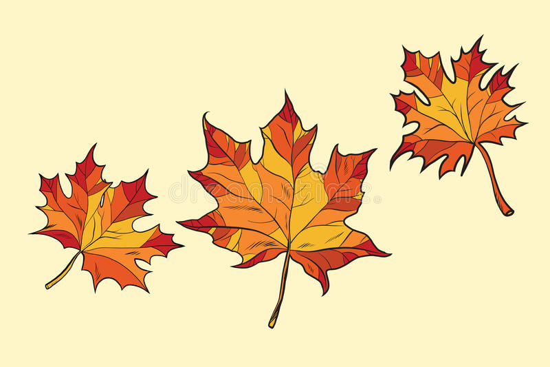 Кленовые листы красные иллюстрация штока