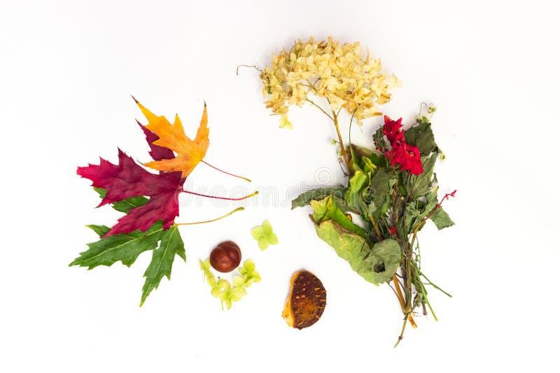 Кленовые листы на белой предпосылке стоковое фото rf