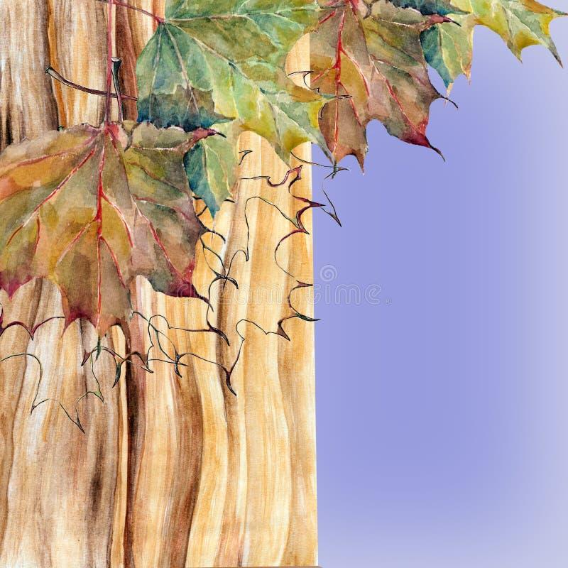 Кленовые листы на голубой предпосылке, акварели коры дерева, картине иллюстрация вектора