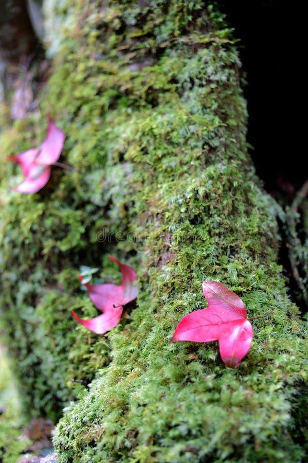 Кленовые листы падения стоковые фотографии rf
