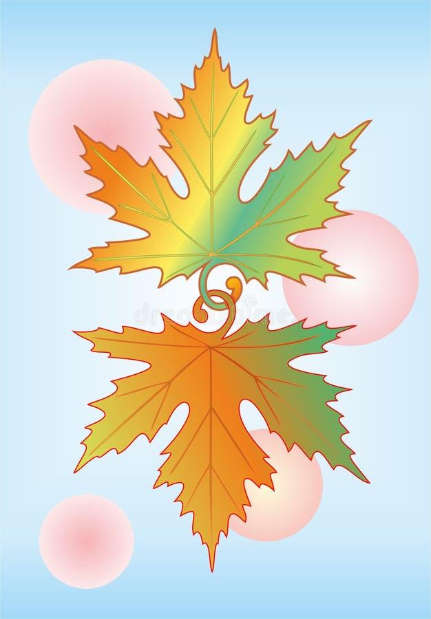 кленовые листы.   стоковое фото rf