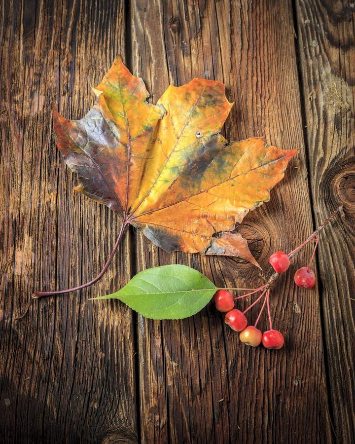 Кленовый лист и crabapples стоковые изображения