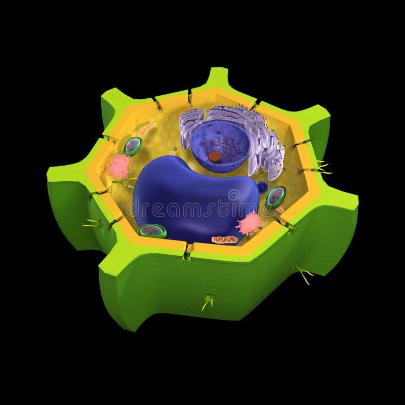 Клетка завода стоковые изображения rf