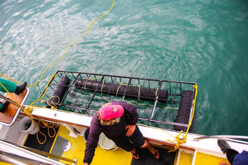 Клетка подныривания акулы в воде стоковое изображение