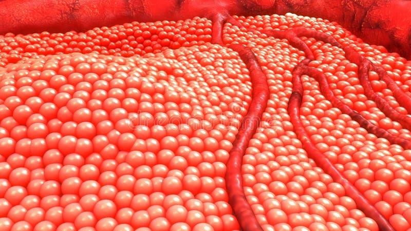 Клетки человеческого тела стоковое фото rf