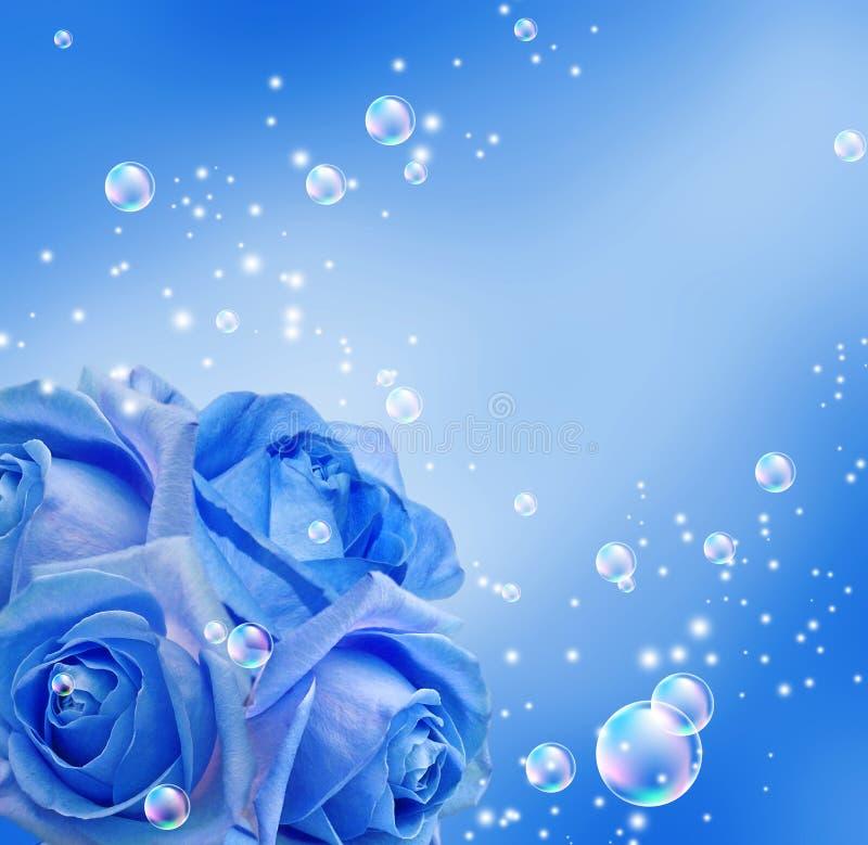 клокочут розы стоковое фото