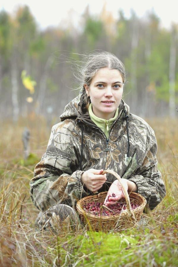 Клюква выбора молодой женщины на трясине. стоковое изображение
