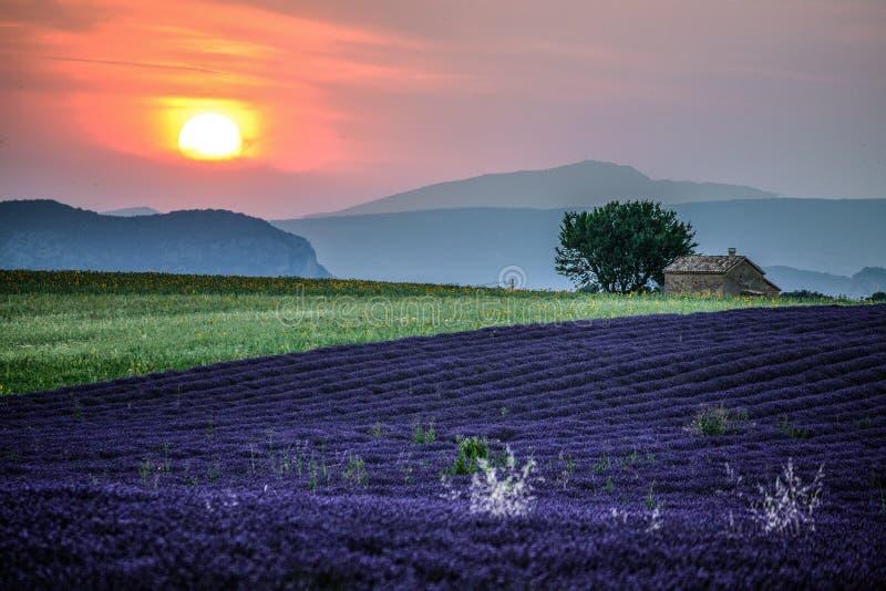 Лаванда fields на заходе солнца около деревни Valensole, Провансали, Франции стоковые фотографии rf