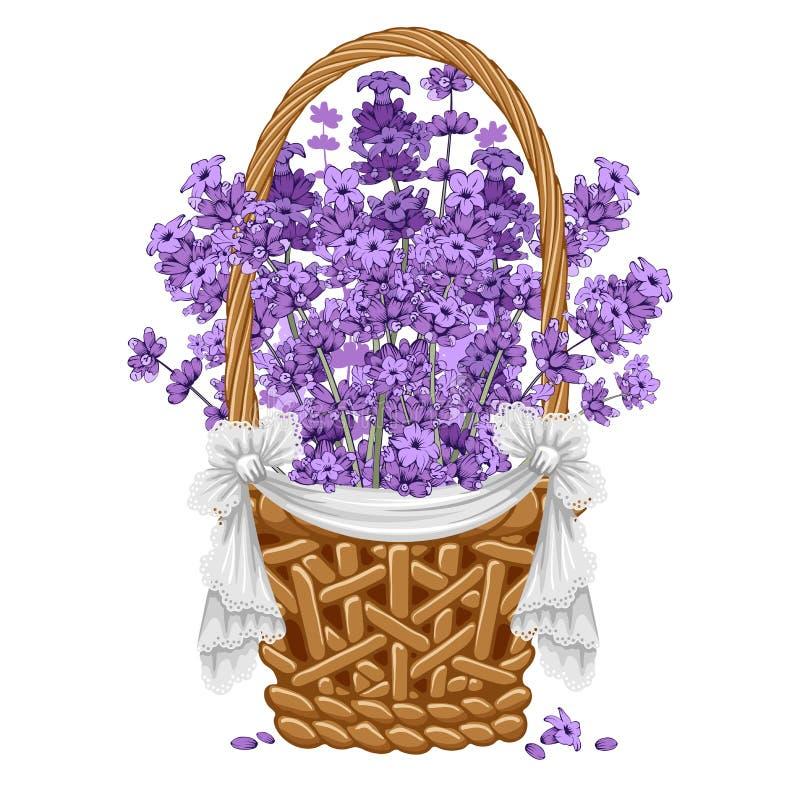 Лаванда в корзине иллюстрация штока