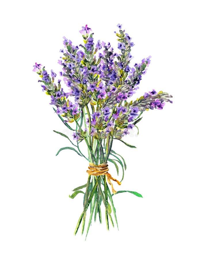 Лаванда цветет пук акварель иллюстрация вектора