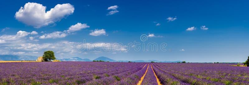 Лаванда fields в сердце Valensole, южной Франции стоковая фотография