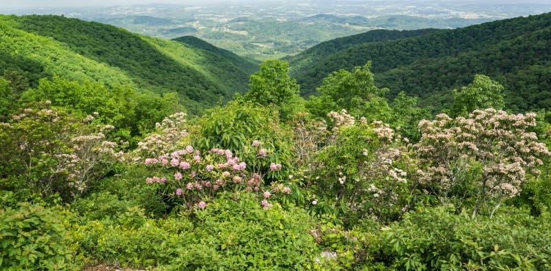 Лавр горы, горы голубого Риджа и Shenandoah Valley - 4 стоковая фотография