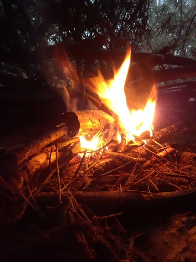 Лагерный костер в древесинах стоковые фотографии rf