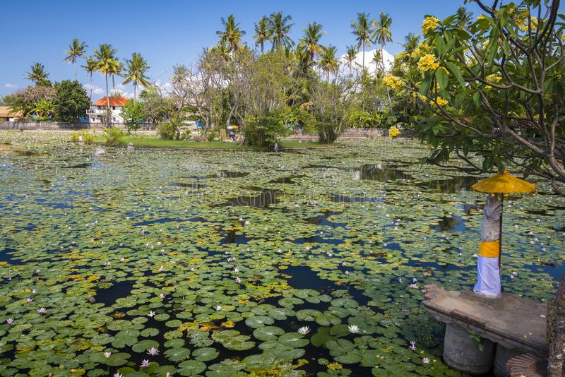 Лагуна лотоса Candidasa, Бали стоковое фото rf