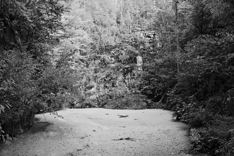 Лагуна на месте бывшего карьера между деревьями в лесе около чехословакской деревни Teletin в летнем отпуске 4-ого августа 2018 стоковое изображение rf