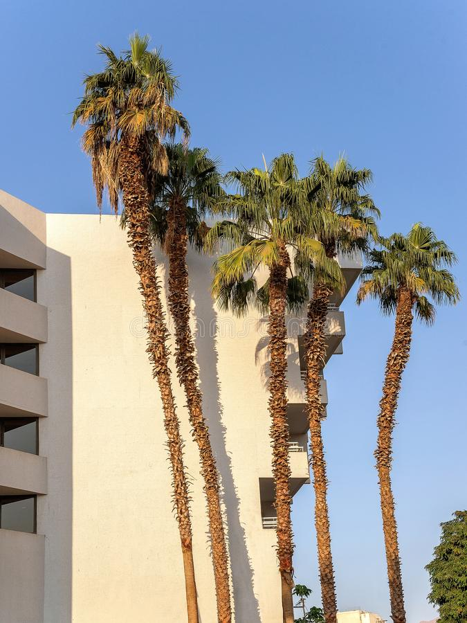 5 ладоней около стены гостиниц стоковое фото