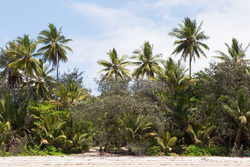 Ладони выравнивая пляж 4 миль, Port Douglas стоковые фото