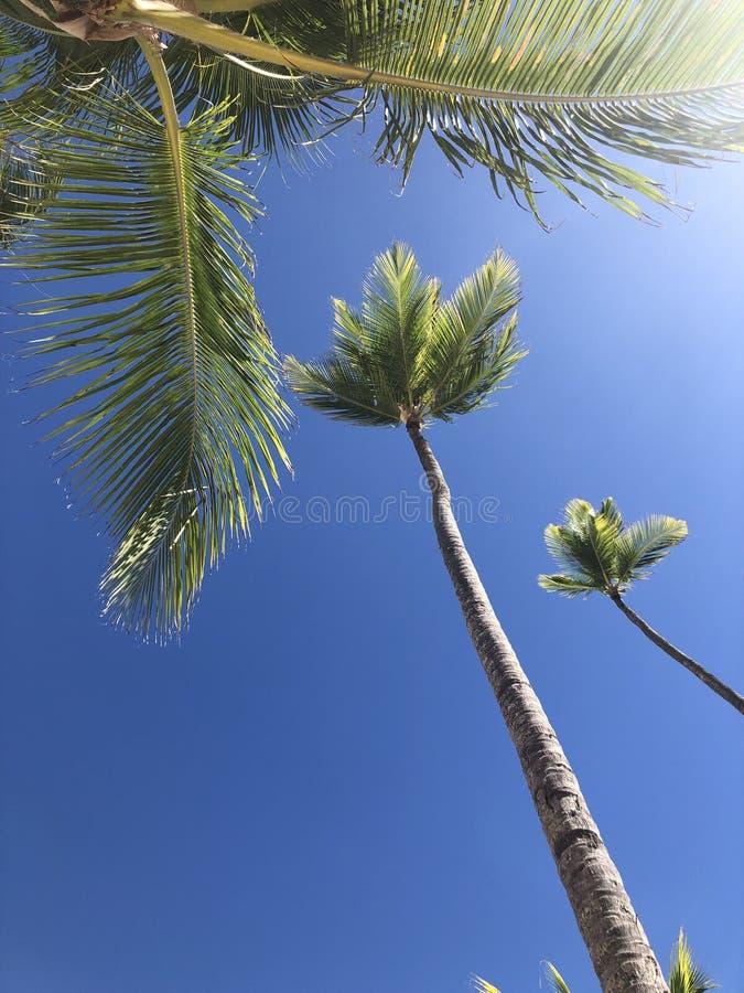 Ладони в ярком голубом небе стоковые изображения rf