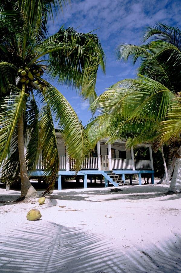 ладони дома пляжа стоковые фото