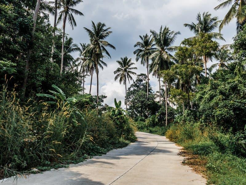 Ладони и дорога кокоса стоковое изображение