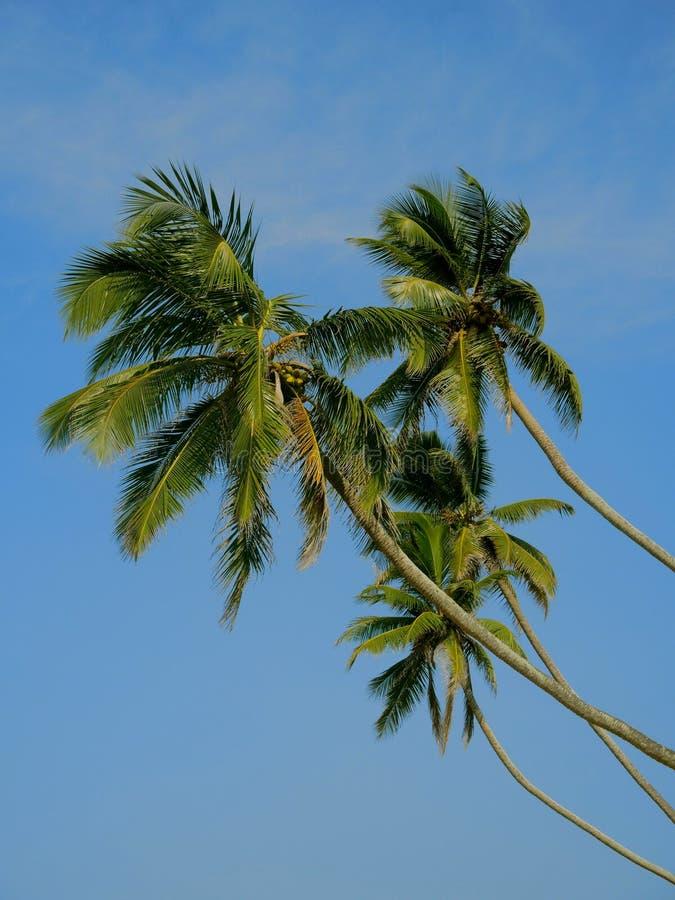 Ладони кокоса в небе стоковое фото