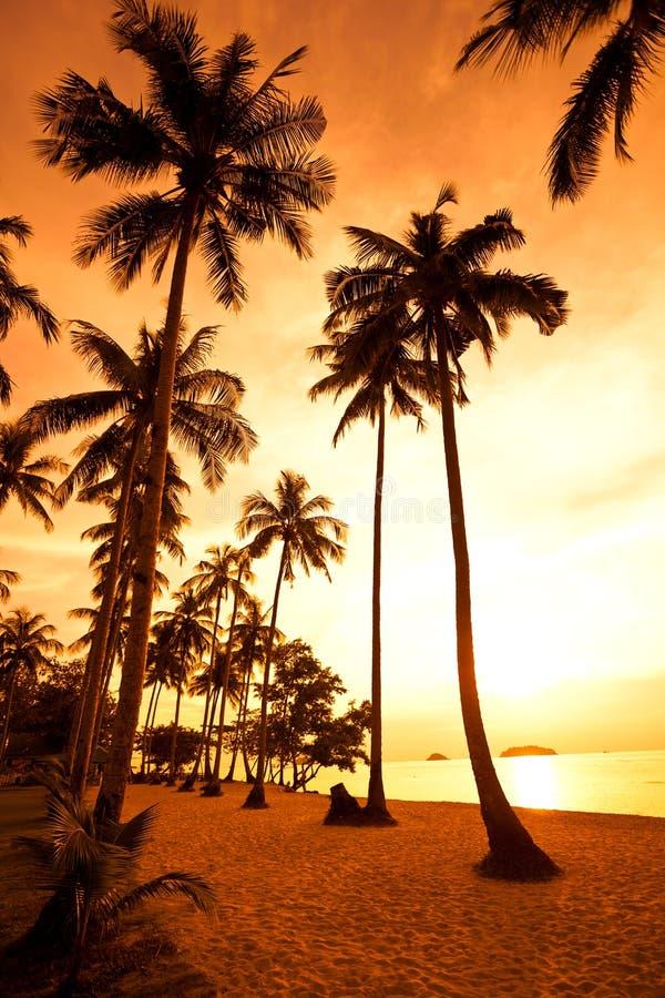 ладони кокоса пляжа зашкурят тропик захода солнца стоковое изображение rf