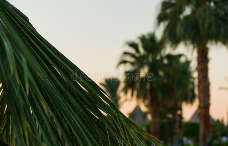 Ладони на заходе солнца стоковое фото rf