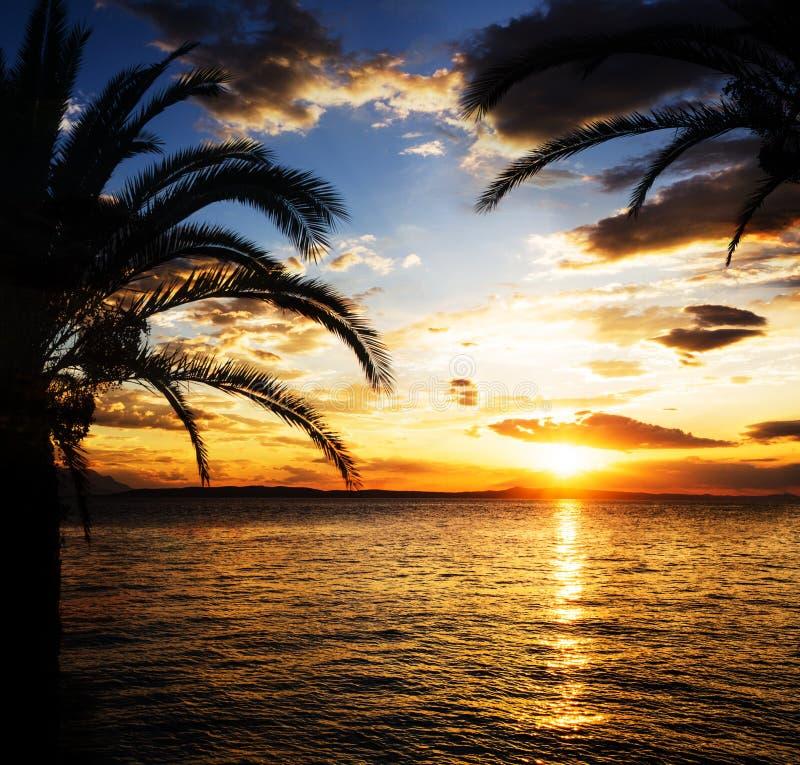 Ладони призваний лета на пляже моря стоковая фотография