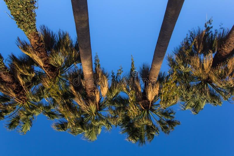 Ладони против голубого неба стоковое изображение