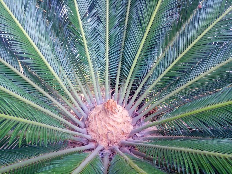 Ладонь выходит зеленый фон Предпосылка пальмы крупного плана стоковое изображение