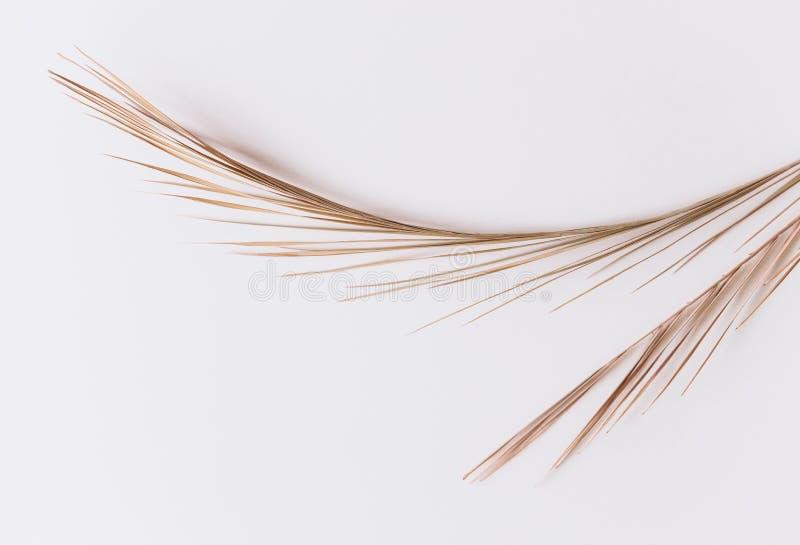 Ладонь выходит колючей линии ветвям белое изолированный стоковое изображение