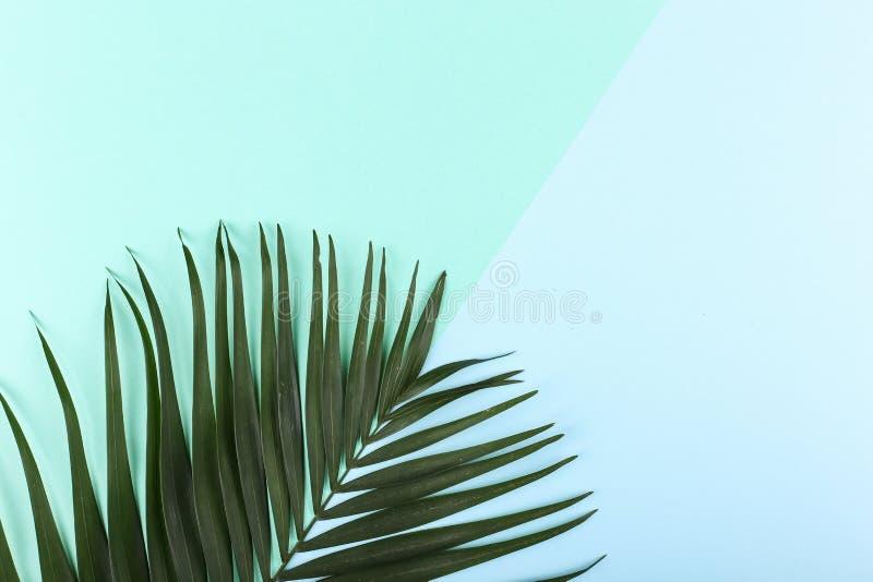 Ладонь выходит на покрашенную бумагу Настроение лета, тропическая предпосылка, пустая стоковое изображение