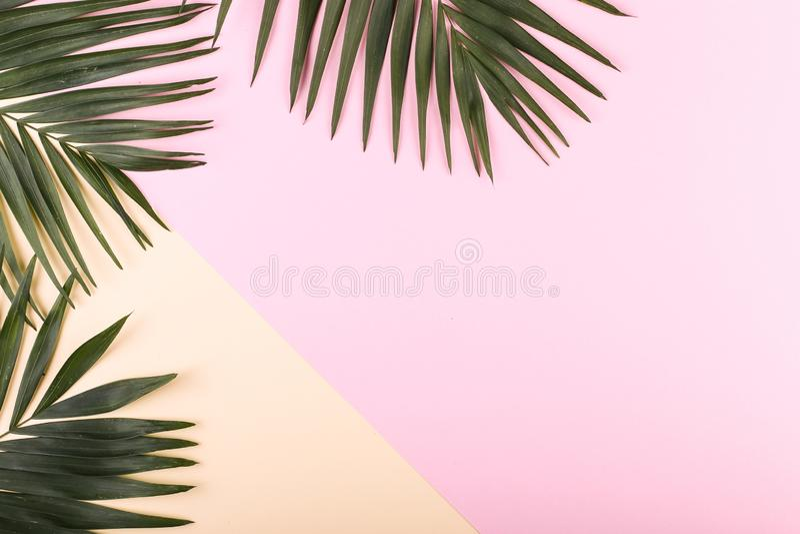 Ладонь выходит на покрашенную бумагу Настроение лета, тропическая предпосылка, пустая стоковые изображения