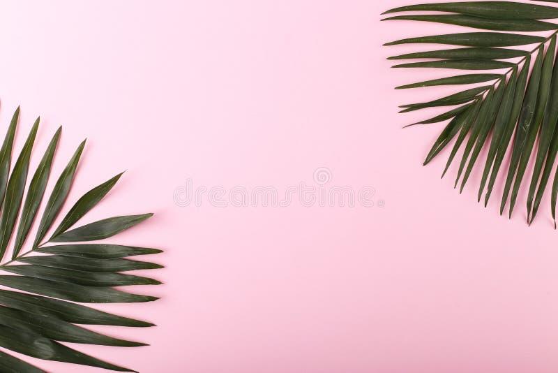 Ладонь выходит на покрашенную бумагу Настроение лета, тропическая предпосылка, пустая стоковые фотографии rf