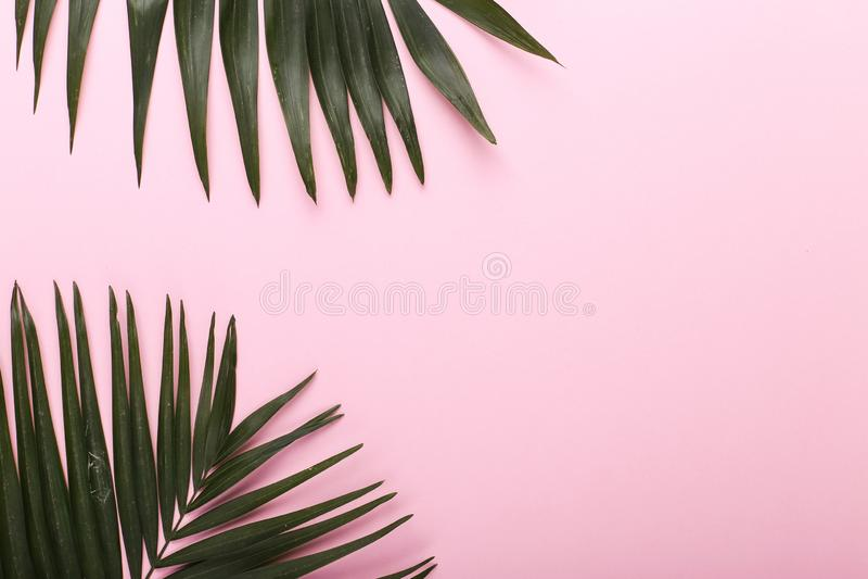 Ладонь выходит на покрашенную бумагу Настроение лета, тропическая предпосылка, пустая стоковое изображение rf