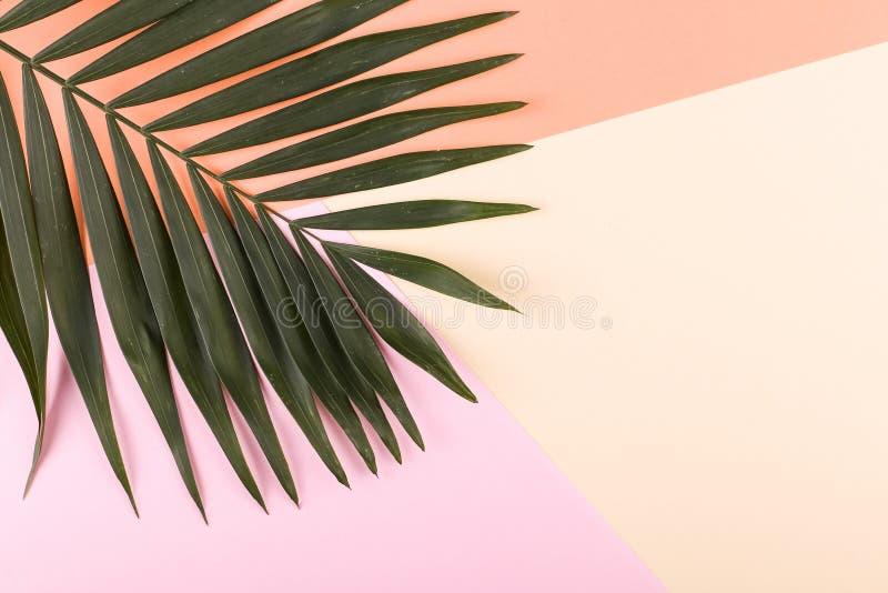 Ладонь выходит на покрашенную бумагу Настроение лета, тропическая предпосылка, пустая стоковое фото