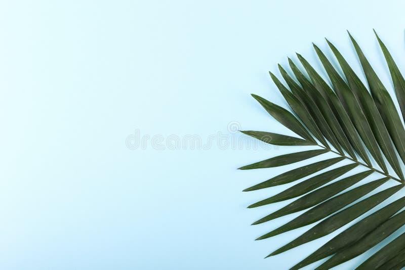 Ладонь выходит на покрашенную бумагу Настроение лета, тропическая предпосылка, пустая стоковое фото rf