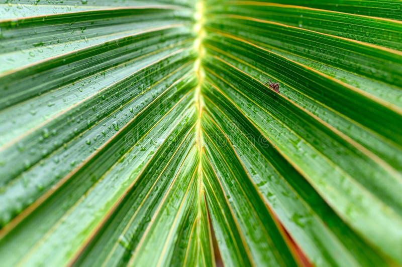 Ладонь выходит с striped естественная зеленая предпосылка стоковые фото