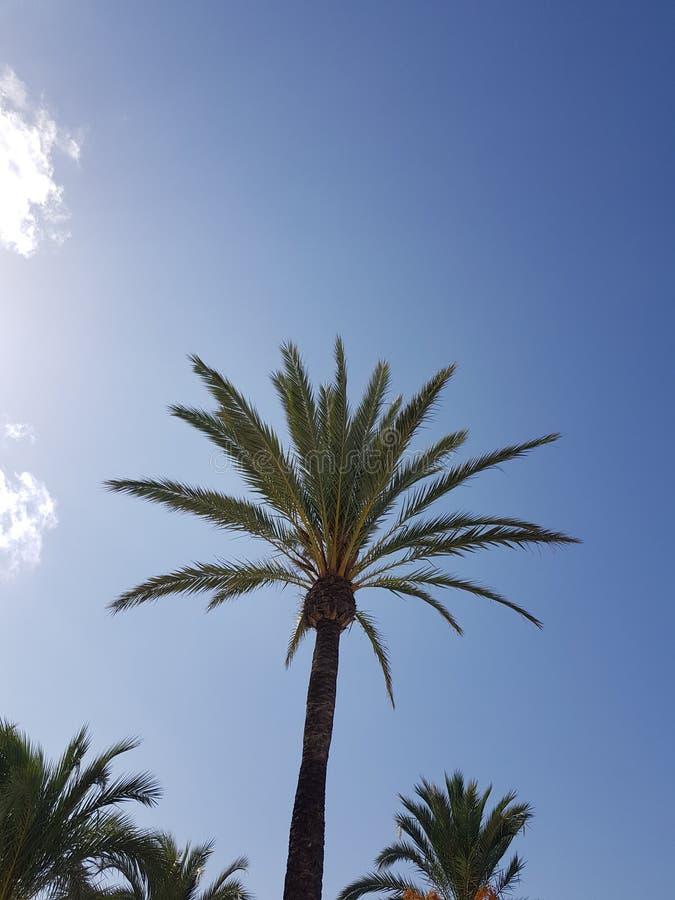 Ладонь в Мальорка стоковые изображения rf