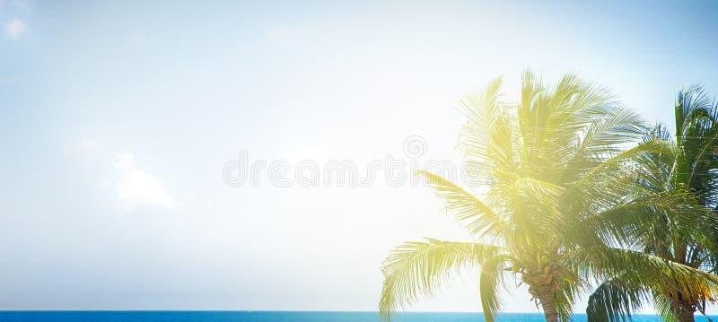 Ладонь, голубой океан и небо стоковое фото