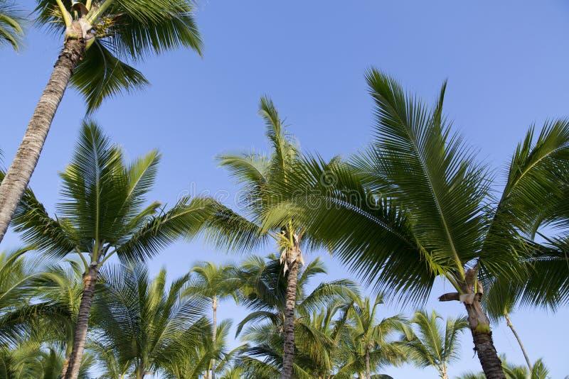 Ладонь и тропический пляж, Доминиканская Республика стоковая фотография
