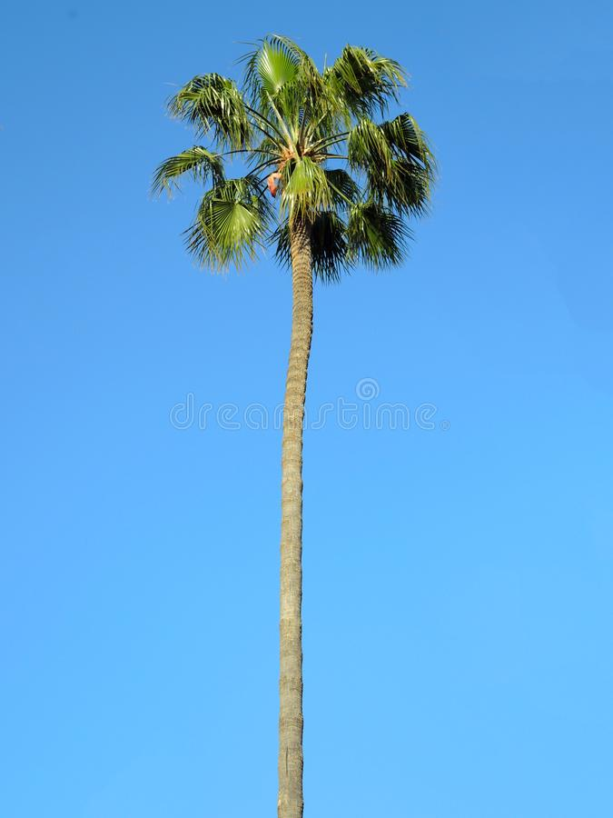 Ладонь кокоса в небе стоковое фото rf